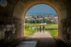 Unter der Autobahnbrücke A6 geht die Weinwanderung