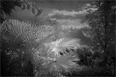 Unter der Palme im fremden Garten