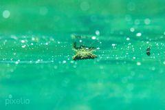 unter der Wasseroberfläche
