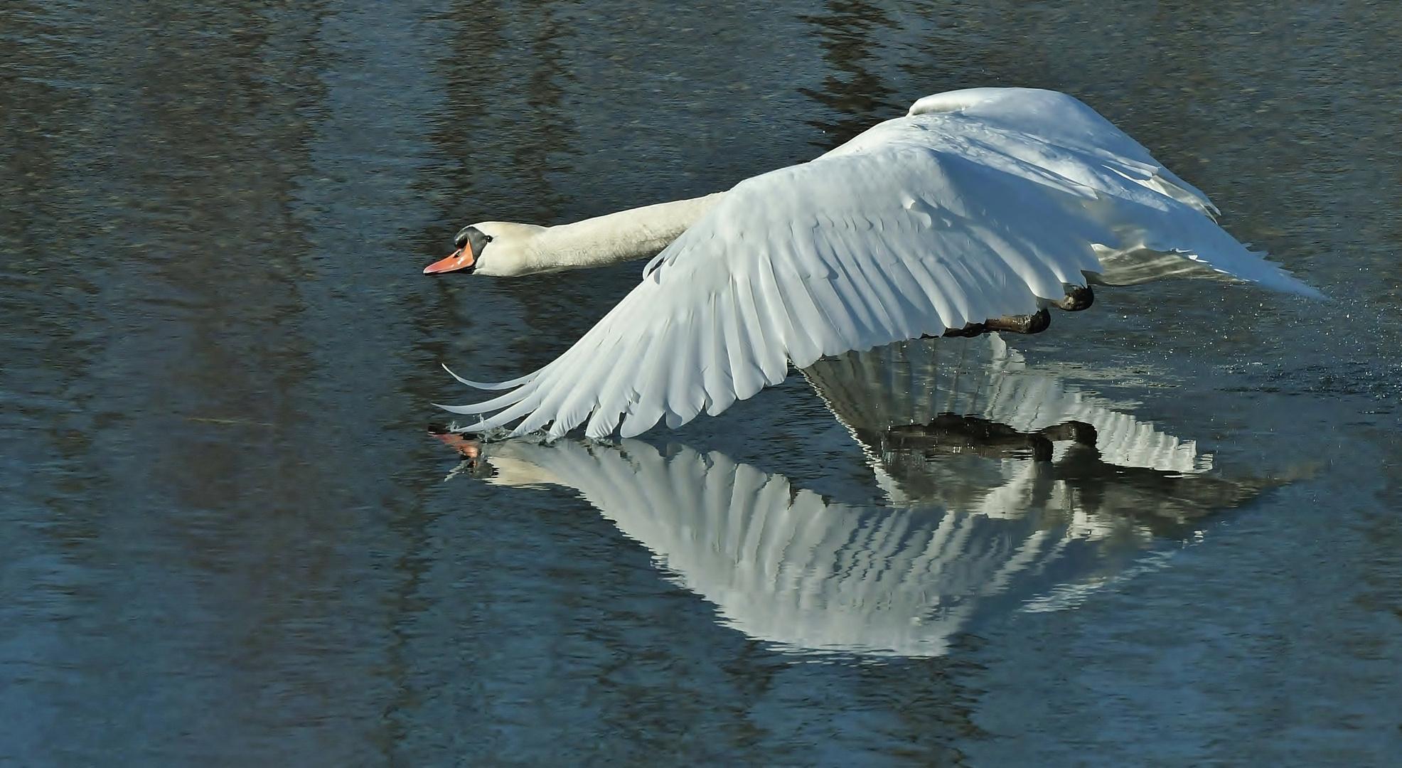 Unter die Flügel geschaut