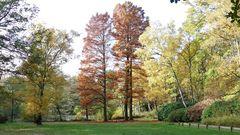 Unter diesen Bäumen (Mitte) wachsen die seltsamen Wurzeln