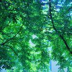 unter einem schützenden Blätterdach