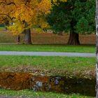 Unter gelben Blättern