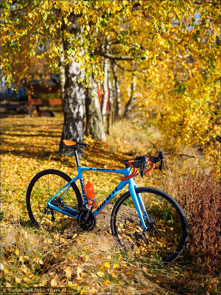 Unter Herbst-Birken