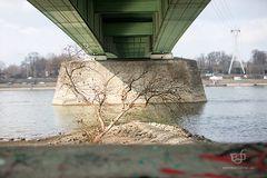 Unter Kölner Brücken