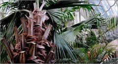 ... unter Palmen ...