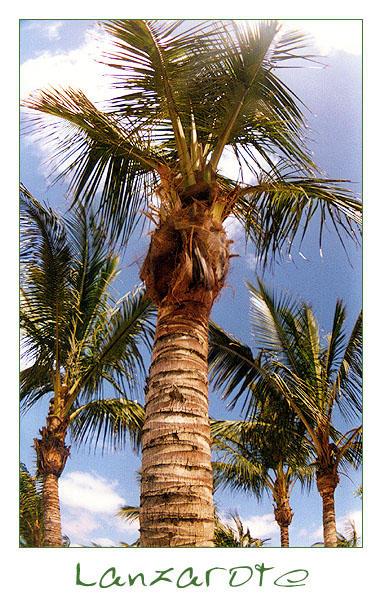 | | Unter Palmen wär' ich gern' | | Costa Teguise | |