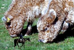 Unter Rindern