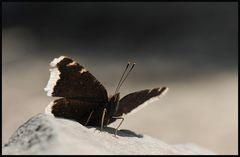 Unter Schmetterlingen