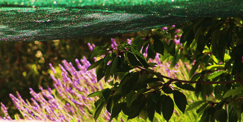 Unter schützendem Schattensegel , eingehüllt von Lavendelduft
