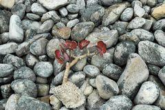 Unter Steinen