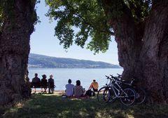 Unter uralten Bäumen am Bodensee