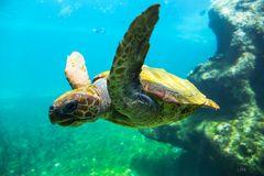 Unter Wasser auf Augenhöhe