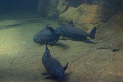 Unter Wasser in Gondwana