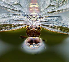 Libellen Surselva GR