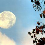 Untergehender Mond