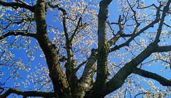 Unterm Baum
