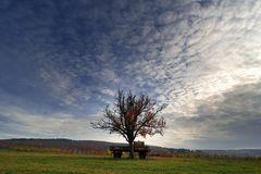 ~ Unterm Birnbaum ~
