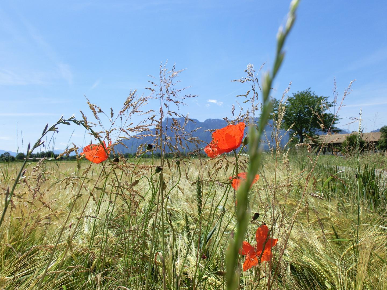 Untersberg (Sicht aus Ainring, Ortsteil Ed)