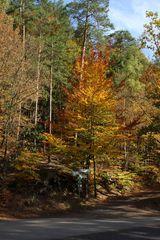 unterschiedliche Herbstfärbungen auf engem Raum
