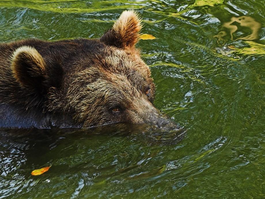 Untersee-Bär