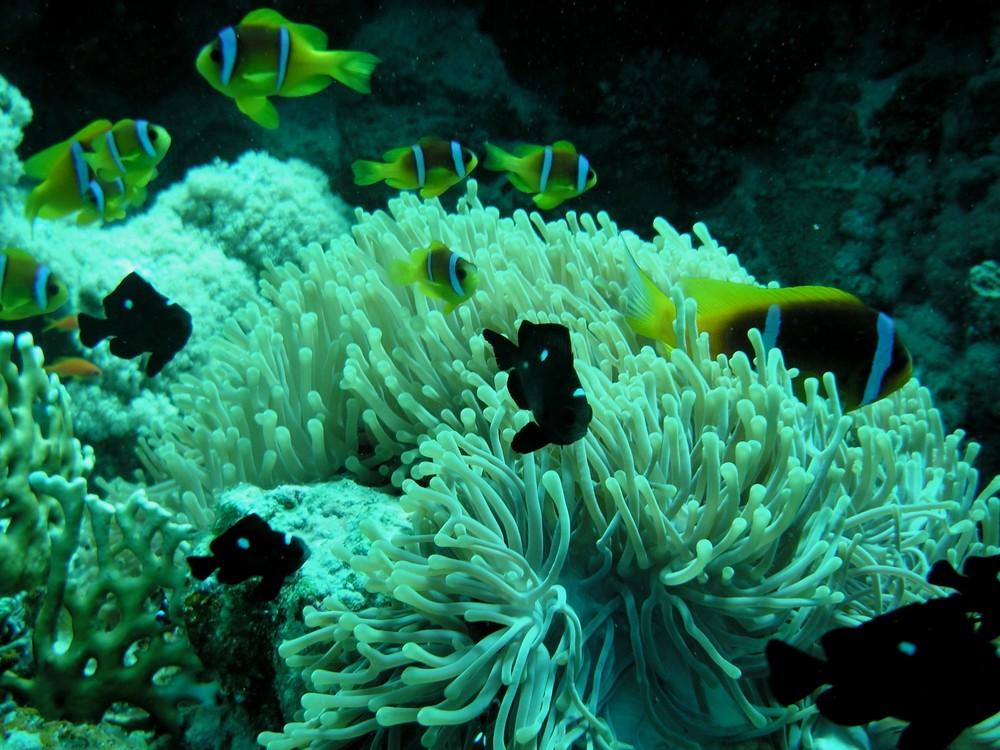 Unterwasser (Anemonenfeld)