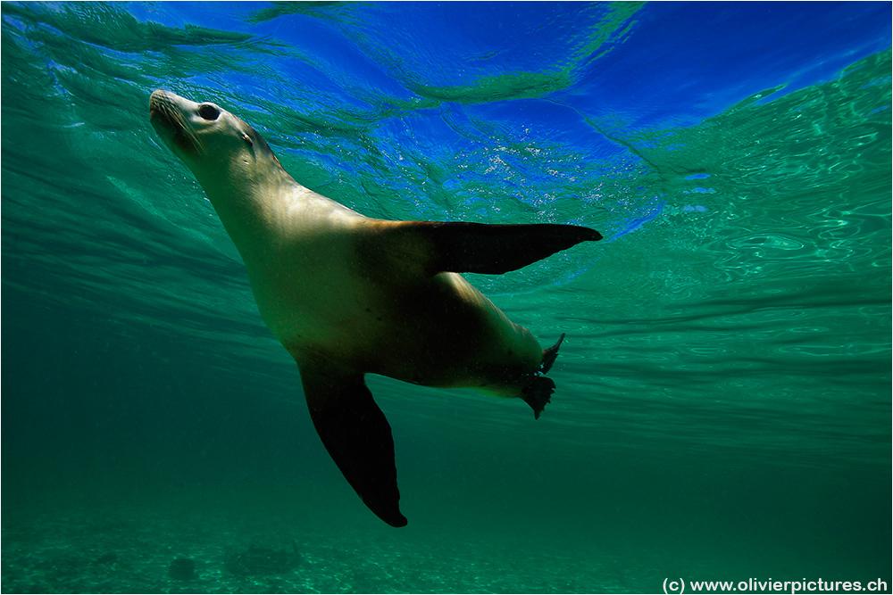 Unterwasser-Ballett