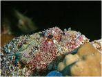 Unterwasser-Drache