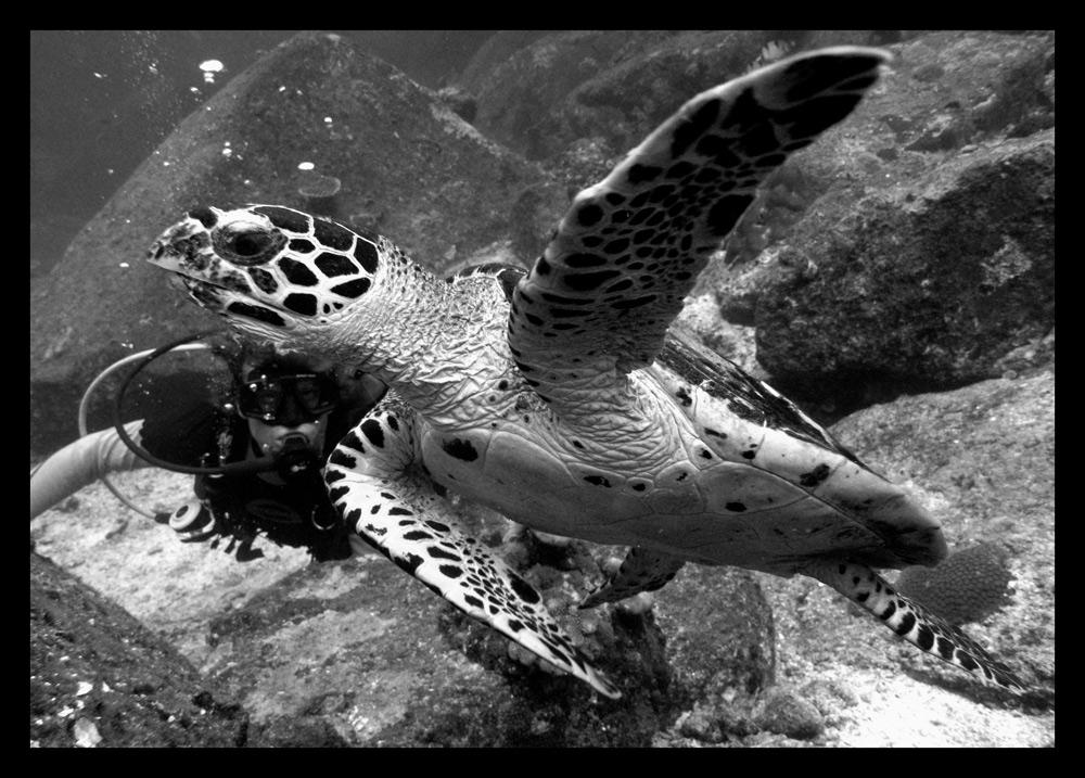 - Unterwasser-Flieger -