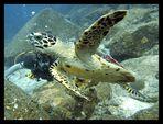 - Unterwasser-Flieger - (neue Version)