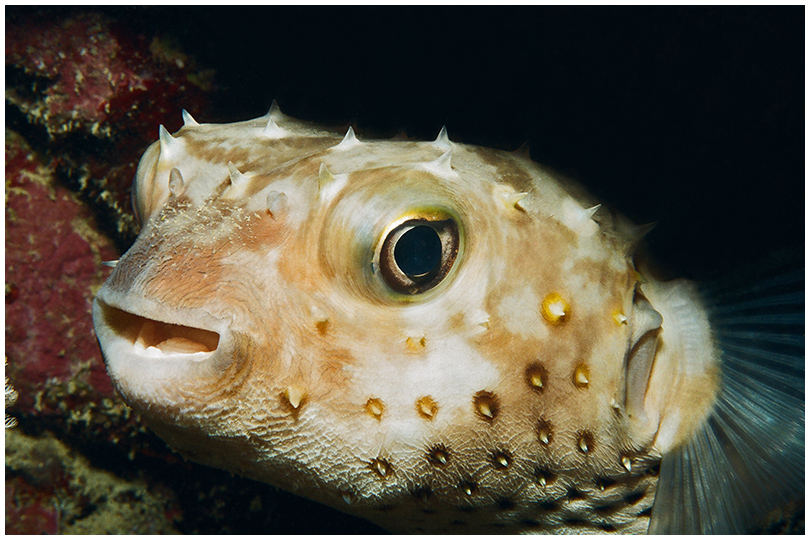 Unterwasser - Igel