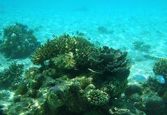 Unterwasser mit der Reiseknipse