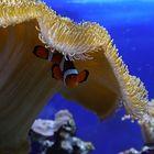 Unterwasser-Pilz