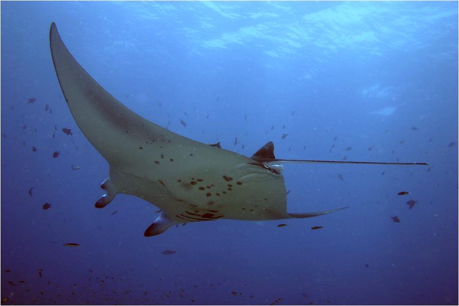 Unterwasser-Segler