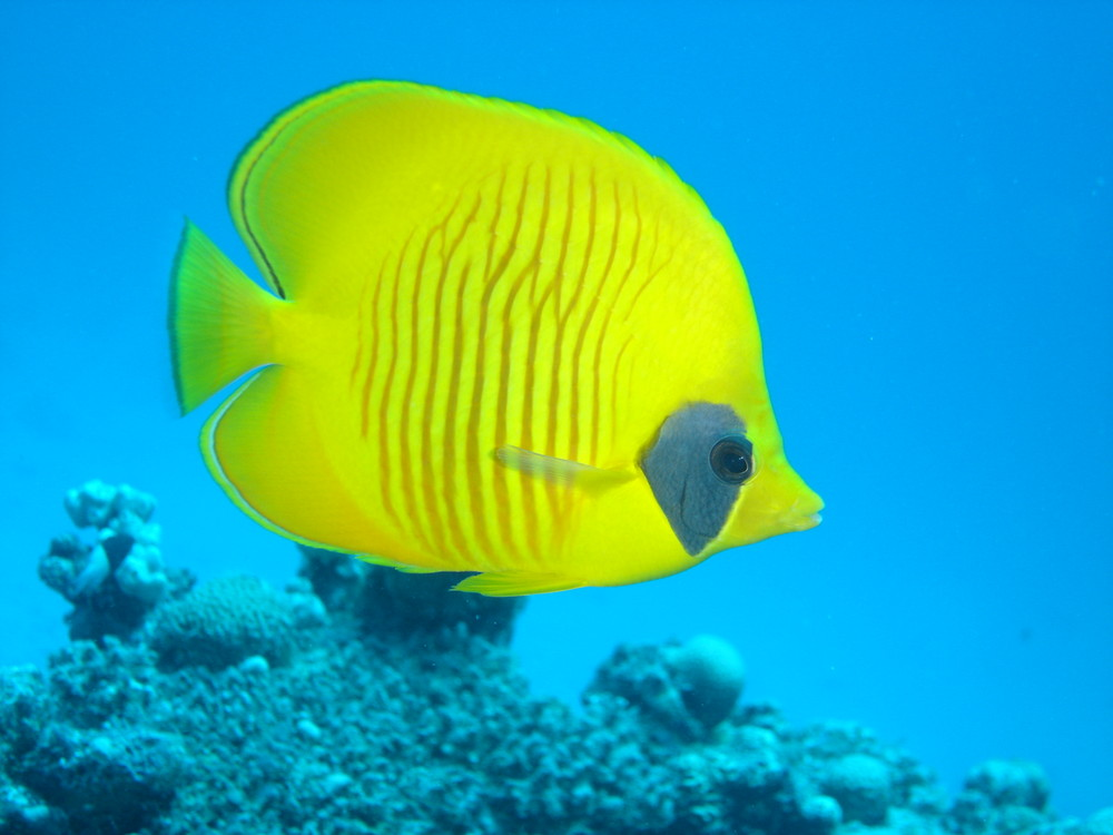 Unterwasseraufnahme Ägypten