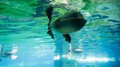 Unterwasserbasstölpel...