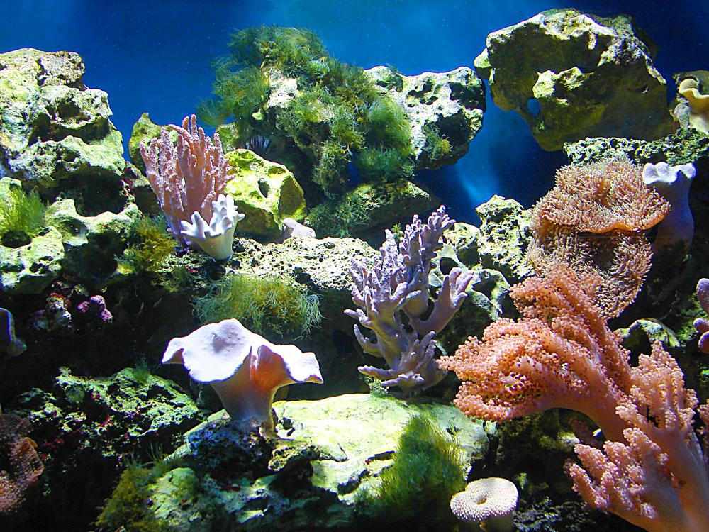 Unterwasserlandschaft ...