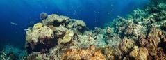 Unterwasserpanorama