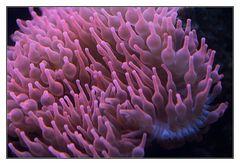 Unterwasserplümchen