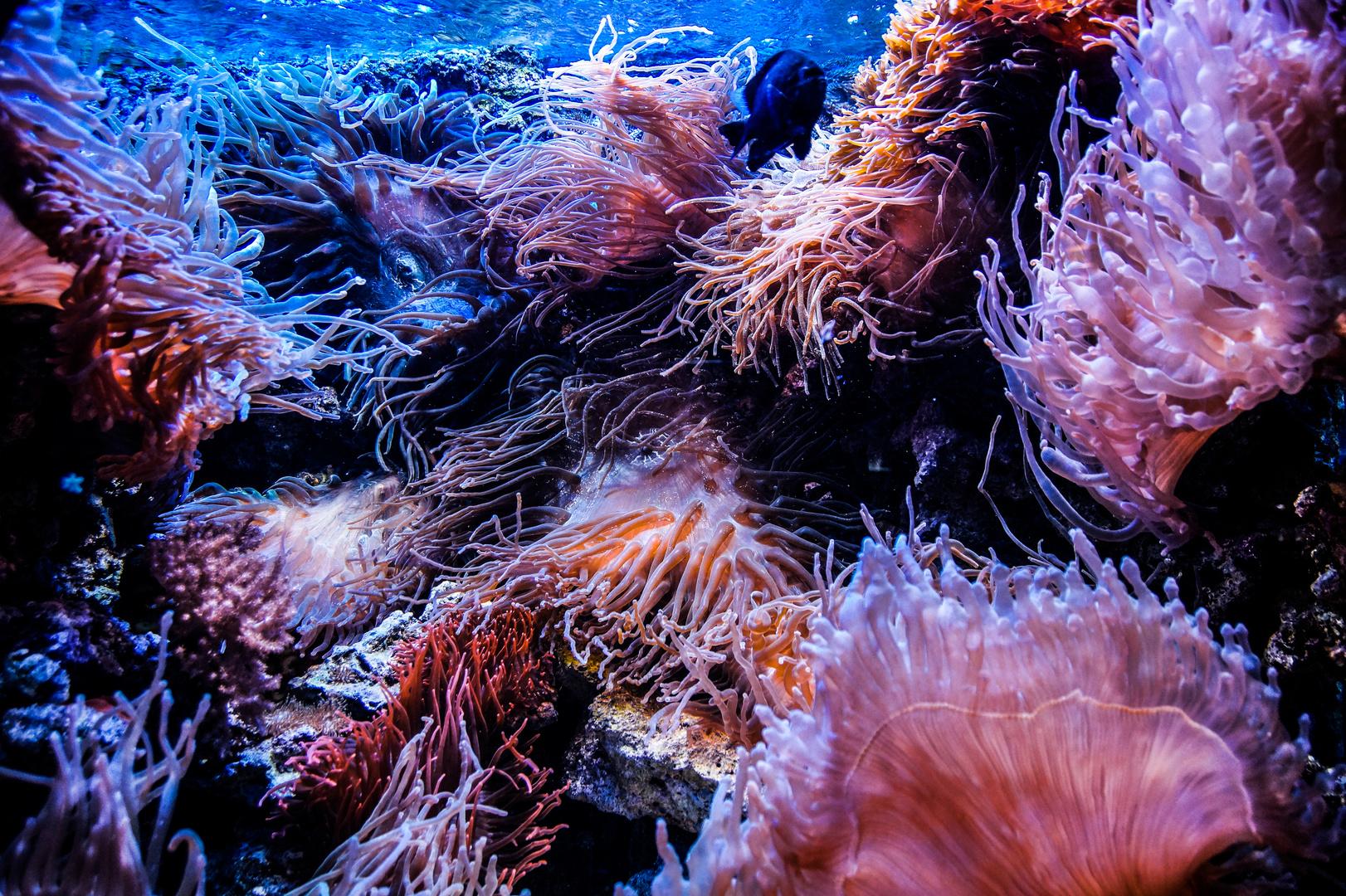 unterwasserwelt foto  bild  tiere zoo wildpark