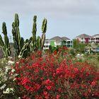 Unterwegs auf Curacao