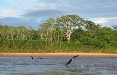 Unterwegs auf dem Rio Tambopata im Regenwald