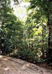 """Unterwegs auf Fraser Island's """"Straßen"""""""