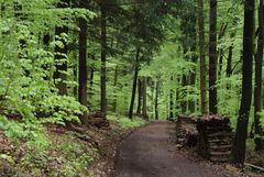Unterwegs im Frühlingswald