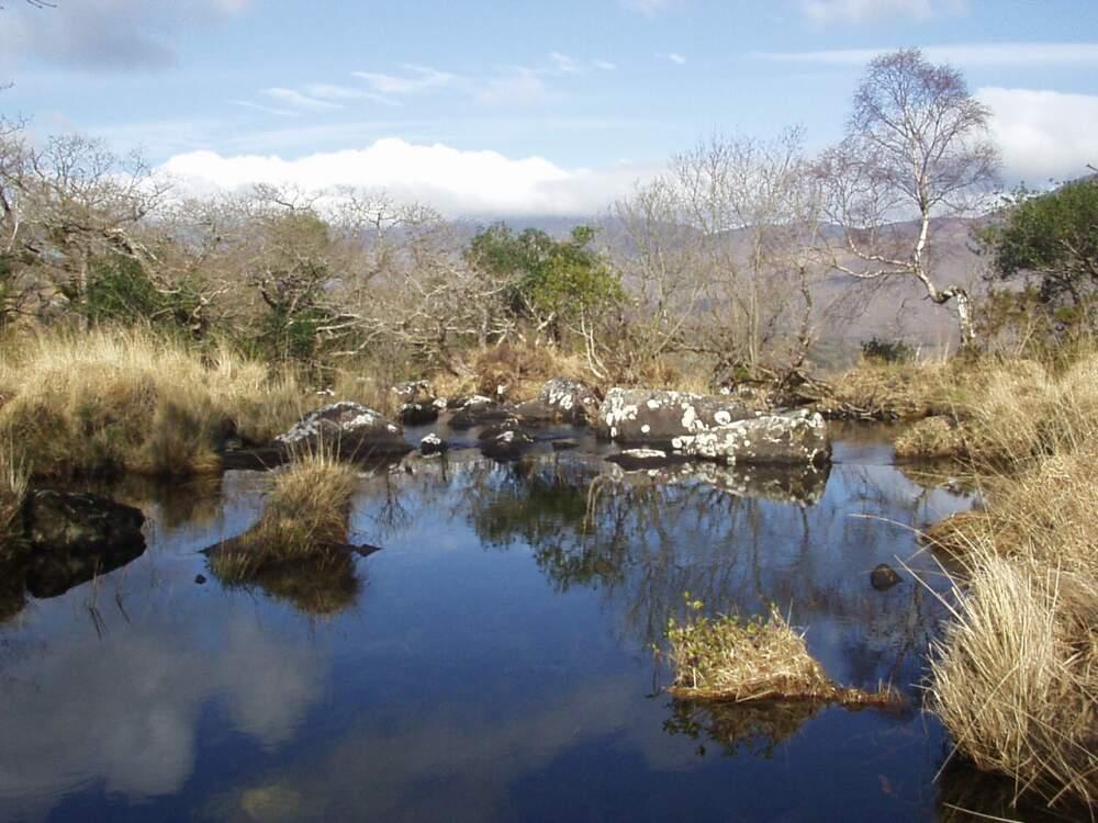 Unterwegs im Killarney National Park