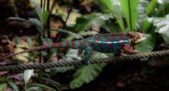 unterwegs im Masoala Regenwald