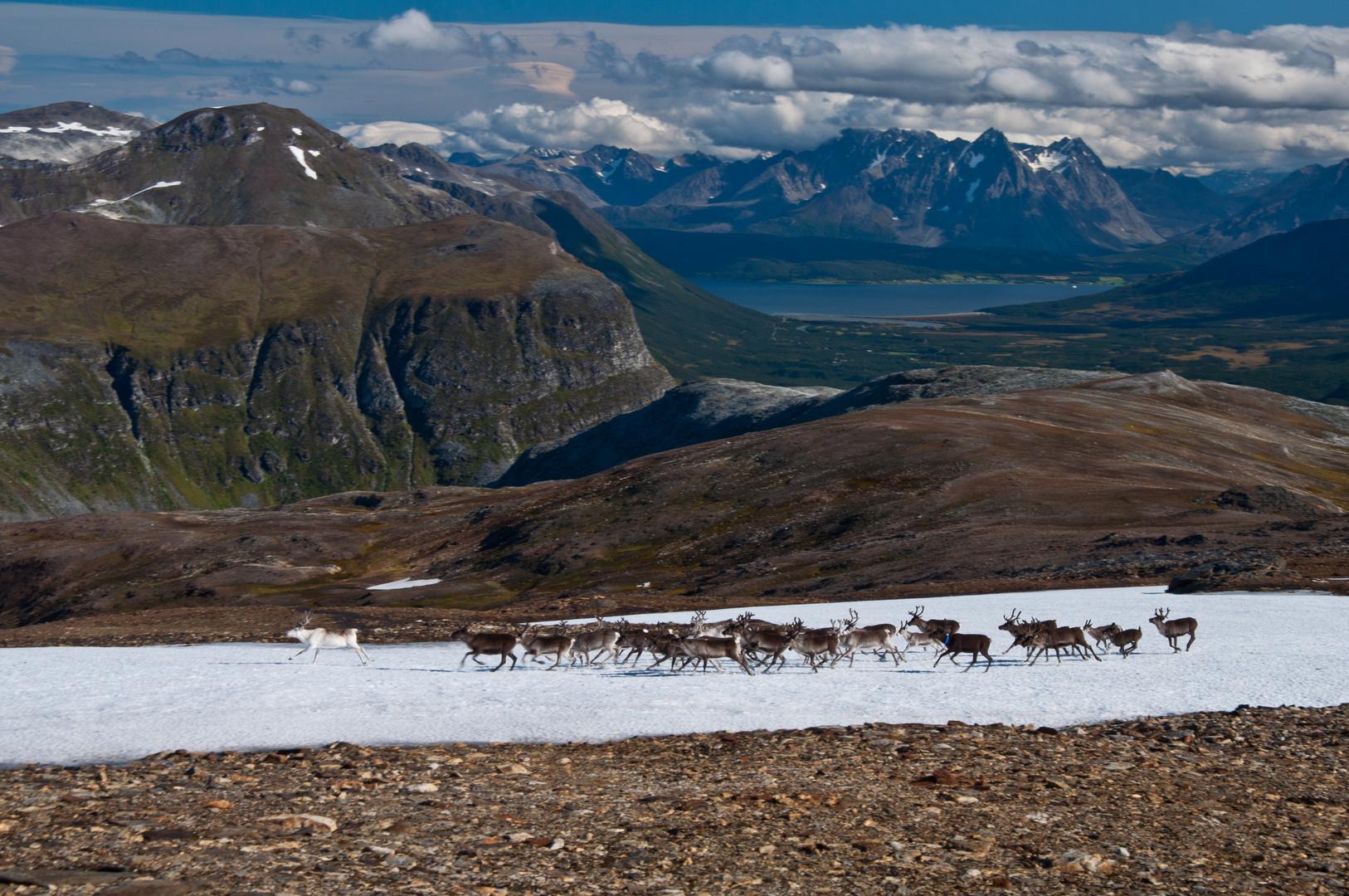Unterwegs im Tromso Fjell oberhalb der Skarvassbu Hütte