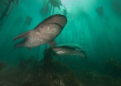 Unterwegs im Unterwasser-Dschungel Südafrikas