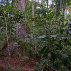 Unterwegs in Amazonien ~ 1 ~
