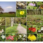 unterwegs- in den Frühling
